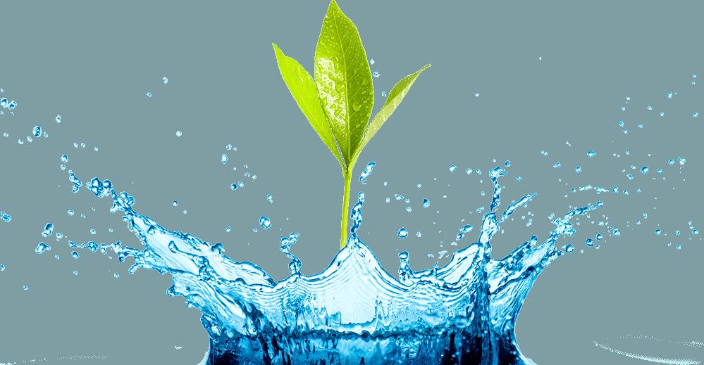 Splash with Plant